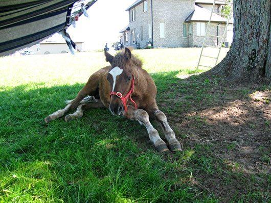 Horses for Sale in Georgia GA - Free Ads