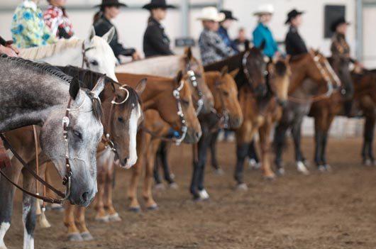 Didsbury Horse Show 2011