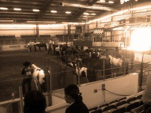 Drayton Paint Horse Show July 2011