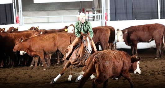 Stampede Cutting Action