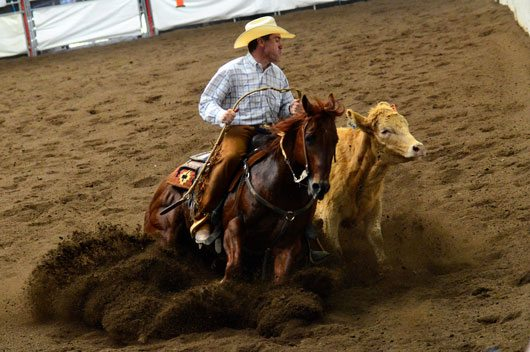 Calgary Stampede Cow Horse Results