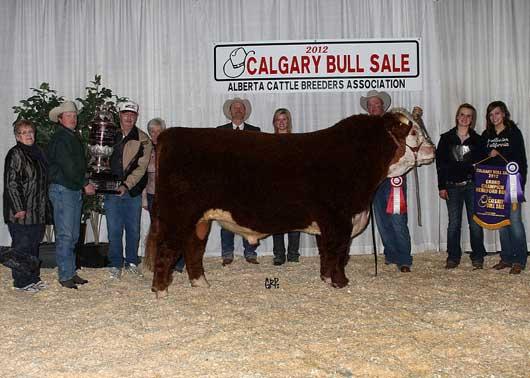 Calgary Bull Sale
