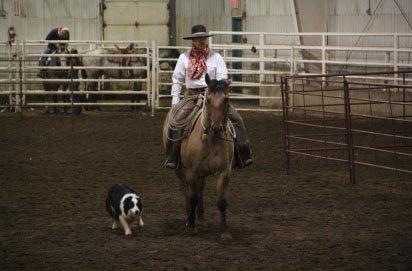 Lakeland Horse Sale