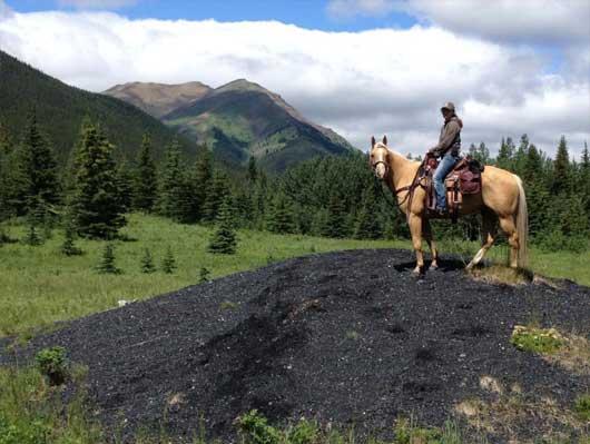 AEF Alberta Equestrian Federation