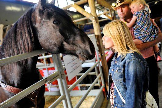 Calgary Stampede Horses