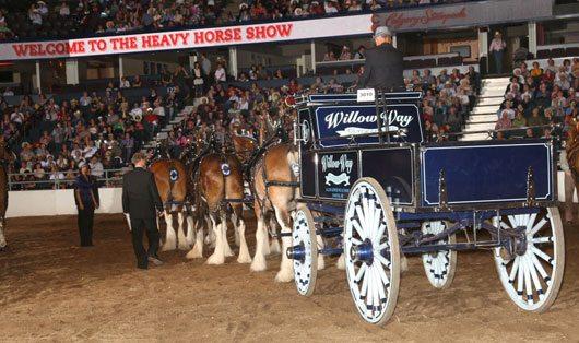 Calgary Stampede Heavy Horses