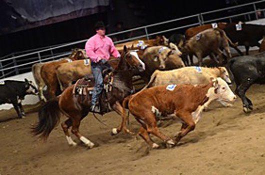Calgary Stampede Team Penning Joel Lesh