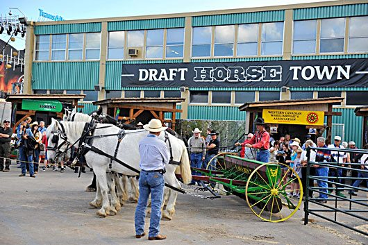 Draft Horse Town Calgary Stampede
