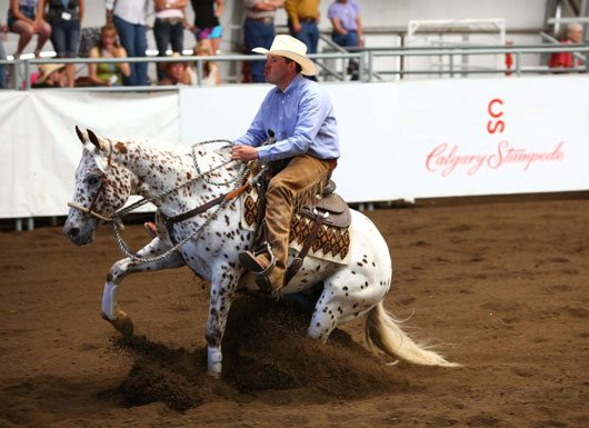 Calgary Stampede's Working Cow Horse Classic