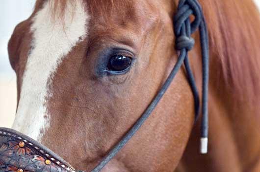 Decathelete Raylee Edwards Walter Quarter Horses