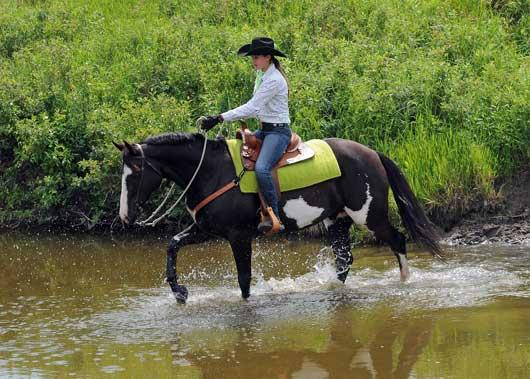 Saskatchewan Paint Horse Club