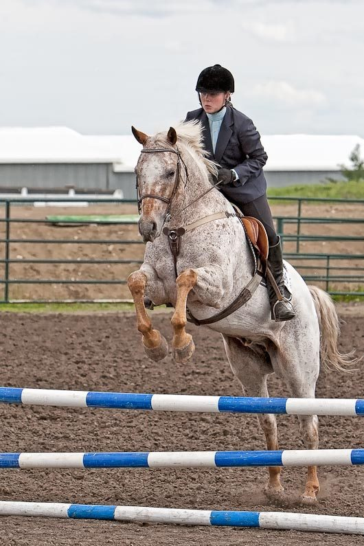 Laura-Gene Haga and Texcel at Rimbey Light Horse Show