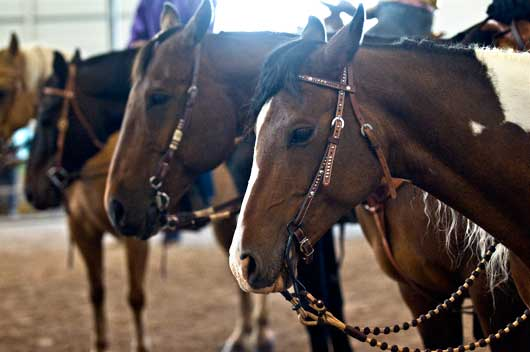 Youth Equine Therapy Alberta