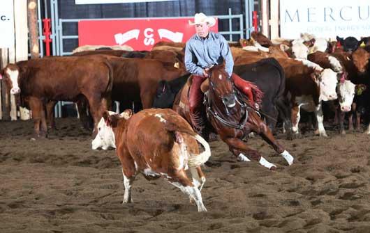 Calgary Stampede Cutting Horse Futurity Dr. Denton Moffat