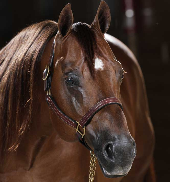 Jacs Electric Spark National Reining Horse Association NRHA