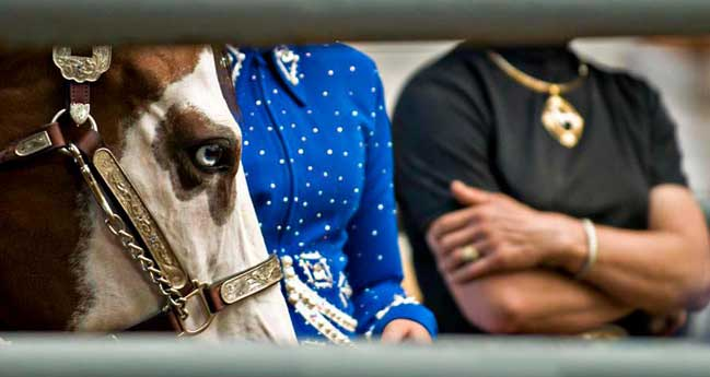 APHA American Paint Horse Association Breeders Trust Sale