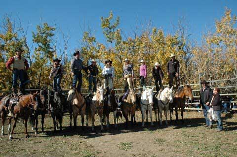 Wild Deuce Horse Sale