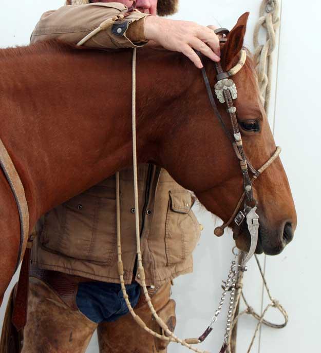 Bridling a horse