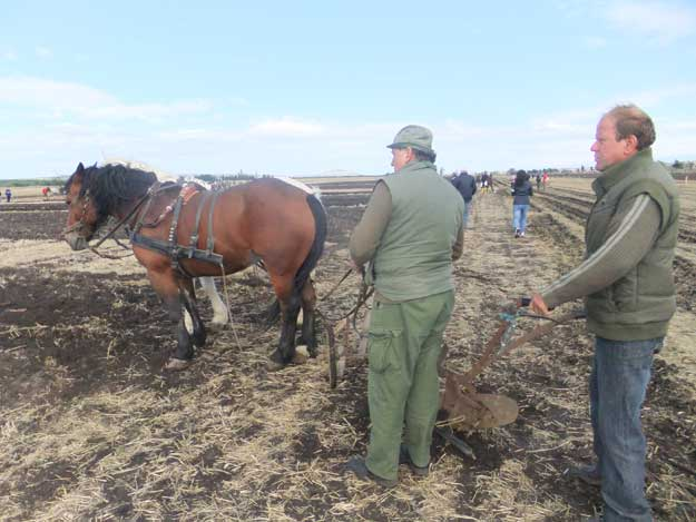 World Horse Plowing Competition