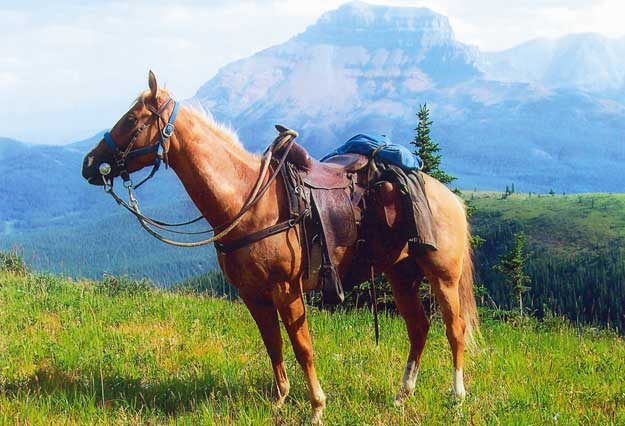 Horse Trail Riding Tips