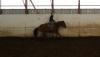 barrelhorse3