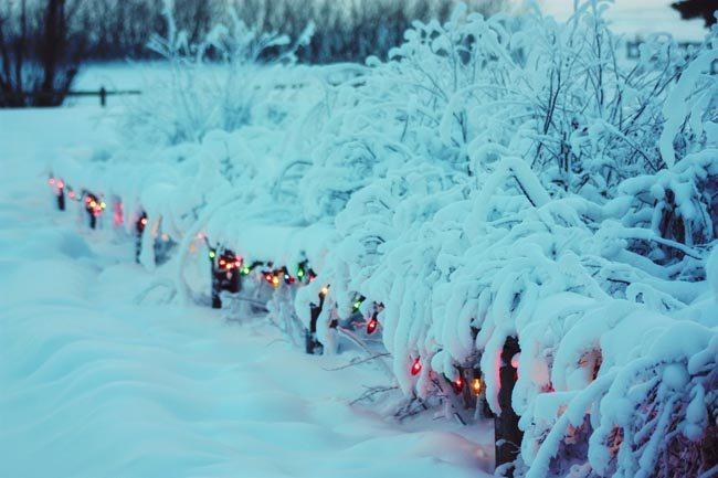 wszchristmaslights