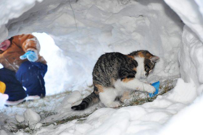 Kitty-&-Shovel