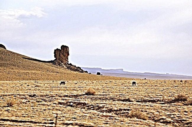 Desert-Landscape-W_Horses