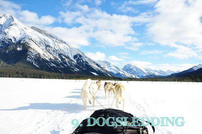 Dog-sled-TEXT