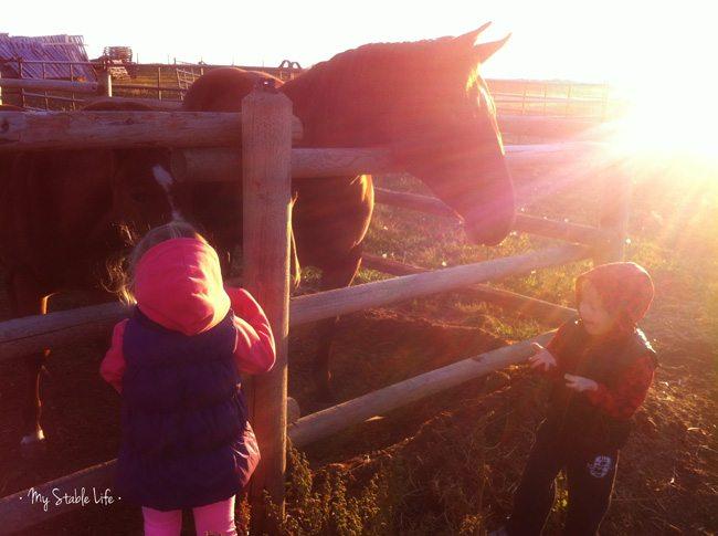 SK-Horses