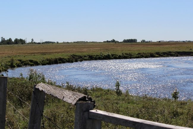 Quality pasture, adequate space per horse and access to water are all factors to consider when viewing  a horse property.