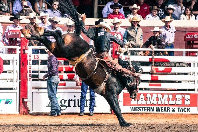 cs rodeo-9172 (650x433)
