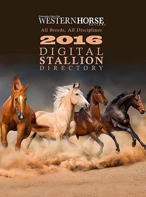 2016 Stallion Guide