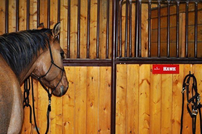 Bailee's Stampede horse Hawk.