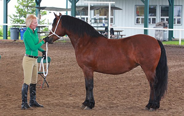 2016 Wild Rose Welsh Pony Show
