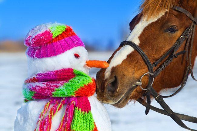 Winter Riding
