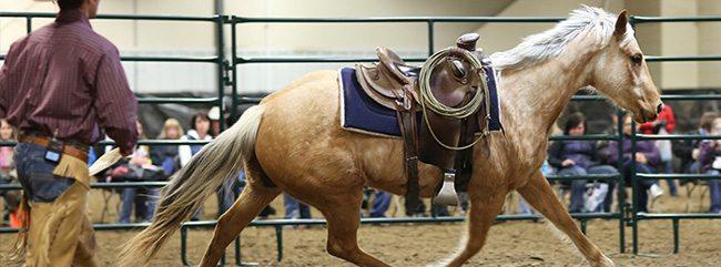 Saskatchewan Equine Expo 2017