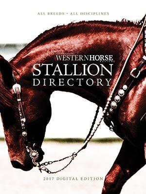 2017 Stallion Guide