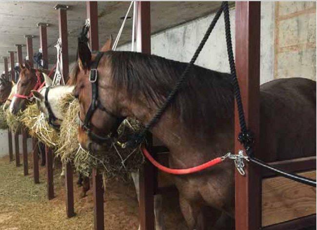 Horse Safe Room