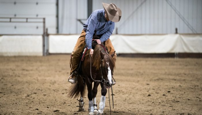 Praise Hemp for the Performance Horse