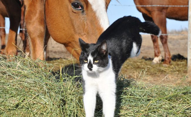 Internal Parasites and Your Barn Cat