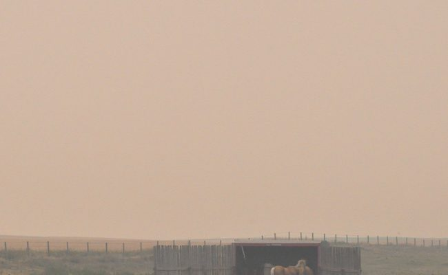 Protecting Horses in Smoke-Filled Air